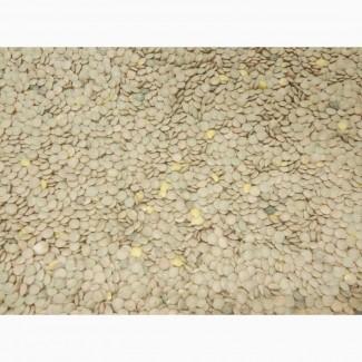 Продам семена чечевица
