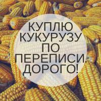 Куплю кукурузу по переписи