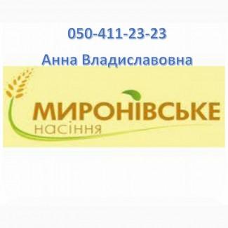 Семена зеленого гороха сорт Зекон - СН-1