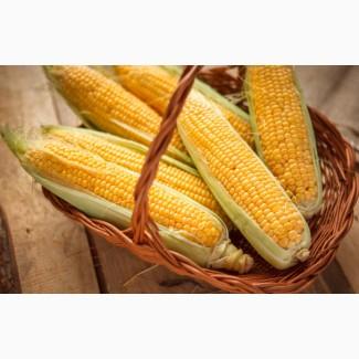 Куплю кукурузу оптом, дорого