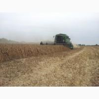 Продам сою ГМО