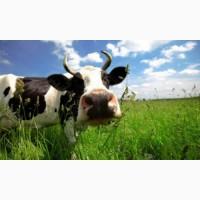 Продаємо суміш насіння кормових трав для пасовищ і сінокосів