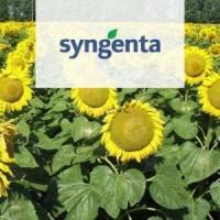 Купить семена подсолнечника Неома