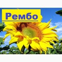 Пропонуємо насіння соняшнику Рембо (125дн) середньоранній Румунської селекції