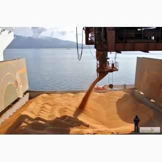 Пшеница 3 класса FOB порты Черного моря