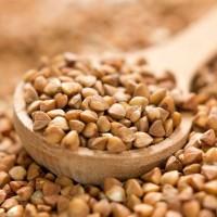 Зерно гречихи куплю у производителя от 80 т