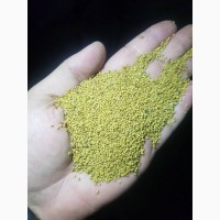 Продам семена люцерны Насіння люцерни