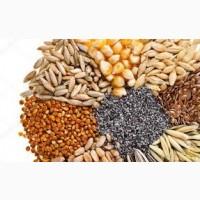Оптом закупаем зерновые культуры || Масличные || Бобовые