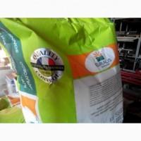 Соняшник насіння. ЄС Белла - високоврожайний гібрид соняшника