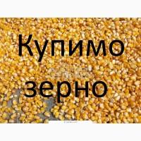 Закуповуємо відходи кукурудзи (вологу кукурудзу, чи не кондицію)