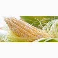 Гибрид Платинум ФАО 340 семена кукурузы