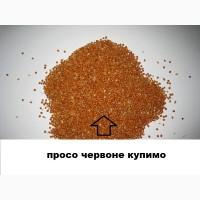 Просо закуповуємо на експорт від фермерів України та їх друзів