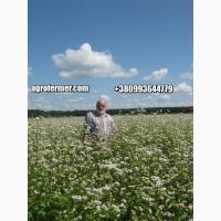 Семена гречихи PENNY Канадский трансгенный сорт