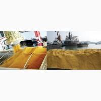 Барда кукурузная FOB порты Черного моря