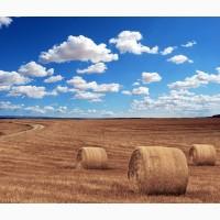 Закуповуємо зернові зі будь-якою формою розрахунку