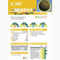 Семена подсолнечника ЕС Янис от Евралис (Euralis) цена за мешок