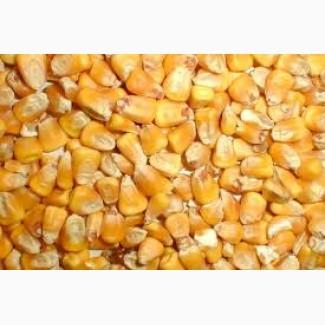 Продам кукурузу фуражную FOB 50000 тонн