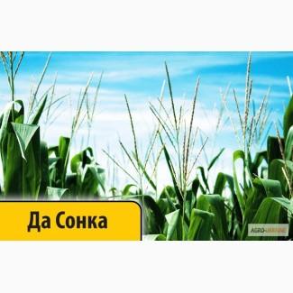 Кукуруза Да Сонка (Dow Seeds / Дау Сидс) импорт