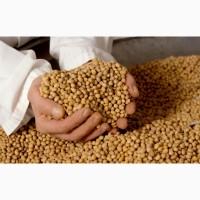 Куплю сою ГМО і не ГМО