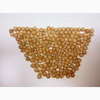 Продам насіння нуту сорт Пам#039;ять