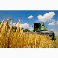 Зерновые, бобовые, масличные 2021