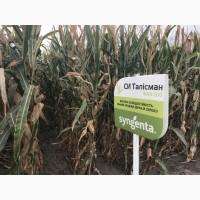 Семена кукурузы СИ Талисман Сингента ФАО 200 цена за мешок