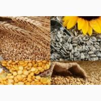 Куплю кукуруза, соя, пшеница, подсолнечник