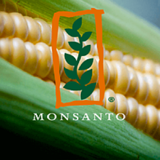 Купить семена кукурузы ДКС 4014