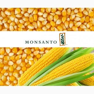 Семена кукурузы производителя «Монсанто»