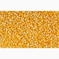 Куплю кукурузу и сою по Черниговской обл