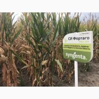 Семена кукурузы СИ Фортаго ФАО 260 цена за мешок