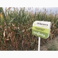 Семена кукурузы СИ Батанга ФАО 340 цена за мешок