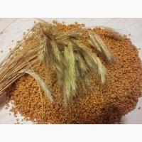 Куплю Зернові. Кукурудза, ячмінь, просо