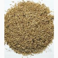 Продам: насіння Грястиці