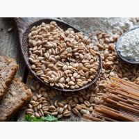 Куплю пшеницю СПЕЛЬТА