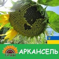 Насіння соняшника Аркансель / Семена подсолнечника Аркансель